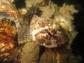 Dive club Get Wet_The Hague  zeedonderpad